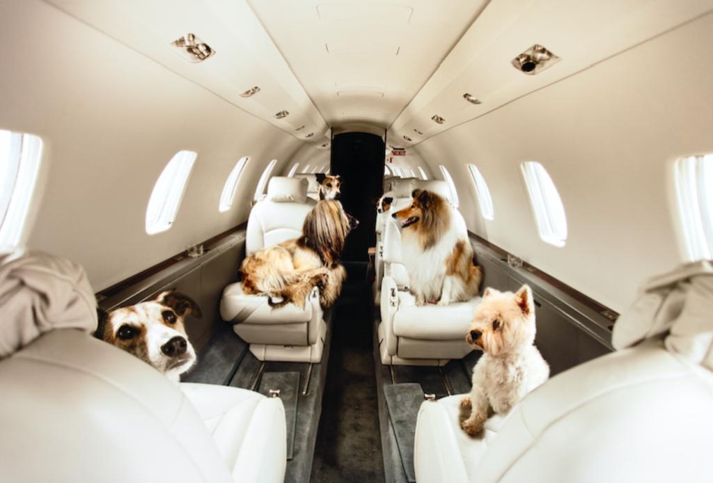 pet travel agency